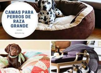 camas para perros grandes baratas