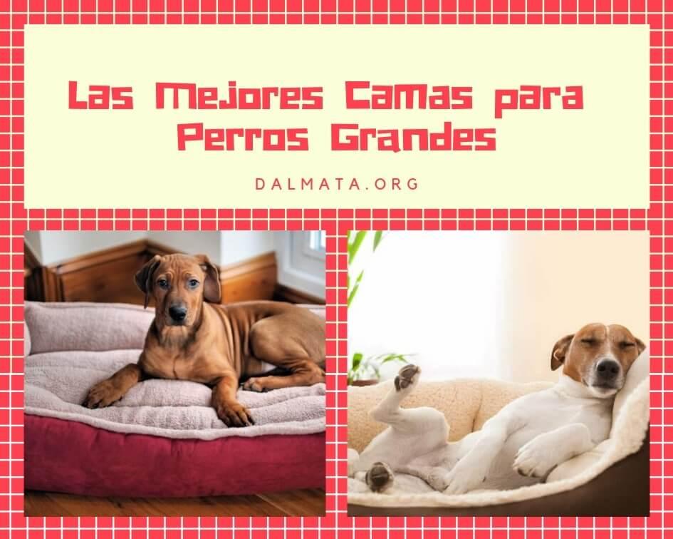 camas para perros grandes